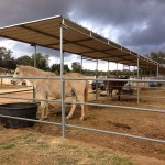 Side view of 24'x48' covered corrals along East side of Ranch