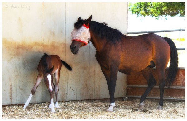 Mare and Newborn Foal at Windfall Ranch